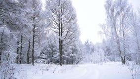 Reis door het sneeuwbos stock footage
