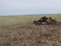 Reis door Rusland De Omgeving van Orenburg stock foto's