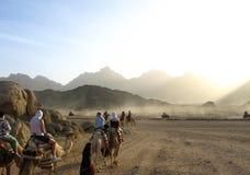 Reis door woestijn Royalty-vrije Stock Foto's
