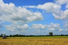 Reis fängt Himmel auf Lizenzfreie Stockfotos