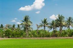 Reis fängt Mischungen der Pflanzenart auf Stockfoto