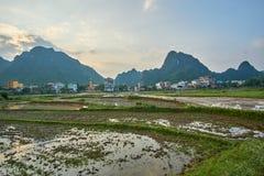 Reis fängt nahe Sonnenuntergang mit Bergen im Hintergrund im Nationalpark Knalles Phong Nha KE, Vietnam auf mit copyspace Stockfotos