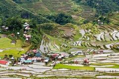 Reis fängt Terrassen in Philippinen auf Stockbilder