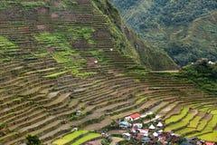 Reis fängt Terrassen in Philippinen auf Stockfoto