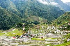 Reis fängt Terrassen in Philippinen auf Lizenzfreie Stockfotografie