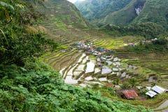 Reis fängt Terrassen in Philippinen auf Stockbild