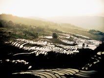 Reis fängt Yuanyang China auf Stockbild