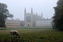Reis Faculdade Cambridge Imagem de Stock Royalty Free