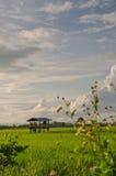 Reis-Feld lizenzfreie stockfotos