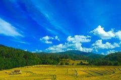 "Reis-Feld-Terrasse †""Mae Hong Son Thailand Lizenzfreie Stockfotografie"