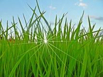 Reis-Feld und Himmel stockfotografie