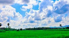 Reis-Feld und Himmel lizenzfreie stockbilder