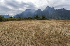 Reis Feld und mountians Lizenzfreies Stockfoto