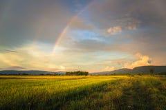 Reis-Feld und Regenbogen Lizenzfreie Stockfotografie