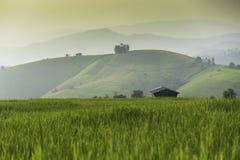 Reis-Felder lizenzfreie stockbilder