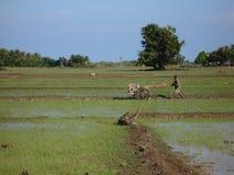 Reis-Felder bei der Arbeit stockbild