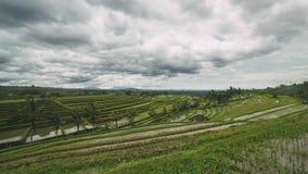 Reis-Feldterrasse Balis Jatiluwih in Bali Indonesien an einem teils bewölkten Tag stock video footage