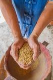 Reis an Hand, Landwirt Lizenzfreie Stockfotografie