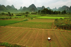 Reis-Landwirt Li Valley Lizenzfreie Stockfotos
