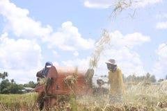 Reis-Landwirtschaft Lizenzfreies Stockbild