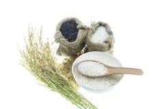 Reis lokalisiert auf weißem Hintergrund Lizenzfreie Stockfotografie
