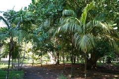 Reis Mauritius royalty-vrije stock fotografie