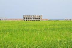 Reis mit einem Kleberblock Lizenzfreie Stockfotografie
