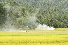 Reis Paddy Burning Lizenzfreie Stockbilder