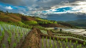 Reis Paddy Field Landscape Mountain stockfotografie