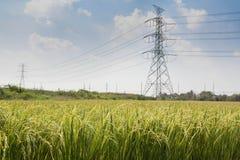 Reis-Paddy und Strombeitrag Stockfoto