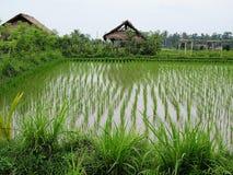 Reis-Paddys, Bali lizenzfreie stockfotos