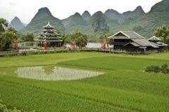 Reis stellt nahe Guilin auf Stockfotografie