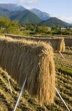Reis-Stiele Stockbilder