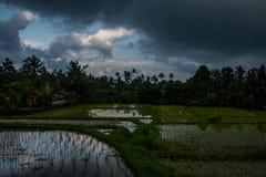 Reis terace voll des Wassers vor starkem tropischem Regen lizenzfreies stockfoto
