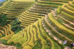 Reis-Terrassen Stockfoto