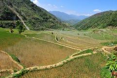 Reis-Terrassen stockbilder