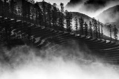 Reis-Terrassen Stockbild