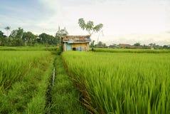 Reis-Terrassen-Arbeitskraft-Hütten auf einem Feld in Bali stockbild