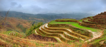 Reis-Terrassen, Dazhai, nahe Longsheng, Guangxi, China. Yao-Dorf Dazhai, Longsheng, Guanxi-Provinz, Südchina. Guilin Lizenzfreie Stockfotografie