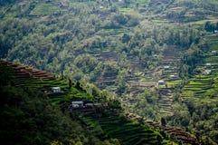 Reis-Terrassen entlang der niedriges Lager-Wanderung Everest im nepalesischen Himalaja lizenzfreies stockfoto