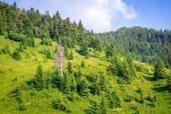 Reis, trekking De zomerlandschap - bergen, groen gras, bomen en blauwe hemel Horizontaal kader Stock Foto