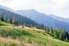 Reis, trekking De zomerlandschap - bergen, groen gras, bomen en blauwe hemel Horizontaal kader Royalty-vrije Stock Afbeelding