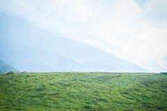 Reis, trekking De zomerlandschap - bergen, groen gras, bomen en blauwe hemel Horizontaal kader Royalty-vrije Stock Fotografie