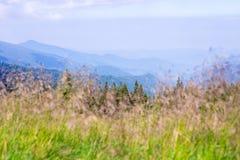 Reis, trekking De zomerlandschap - bergen, groen gras, bomen en blauwe hemel Horizontaal kader Stock Fotografie