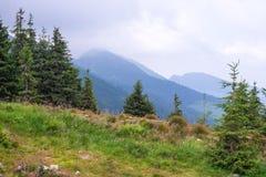 Reis, trekking De zomerlandschap - bergen, groen gras, bomen en blauwe hemel Horizontaal kader Royalty-vrije Stock Foto's