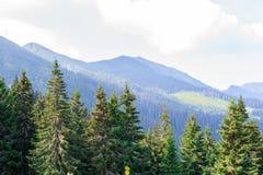 Reis, trekking De zomerlandschap - bergen, groen gras, bomen en blauwe hemel Horizontaal kader Royalty-vrije Stock Foto