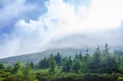 Reis, trekking De zomerlandschap - bergen, groen gras, bomen en blauwe hemel Horizontaal kader Stock Foto's