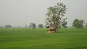 Reis und Ansicht stock video