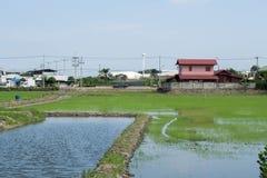 Reis und Gräser in Thailand Stockbild