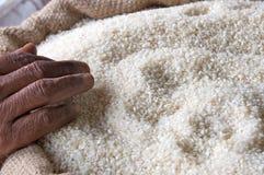 Reis und Hand Stockbilder
